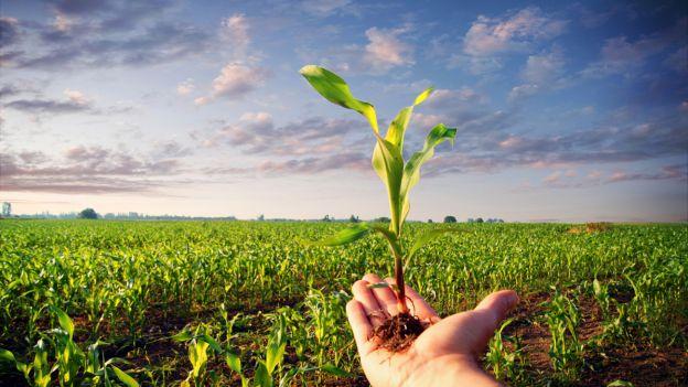 Qualità della coltivazione biologica: nutrimento per l'anima?